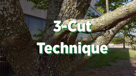 Thumbnail for entry A Guarantee to Pruning Trees