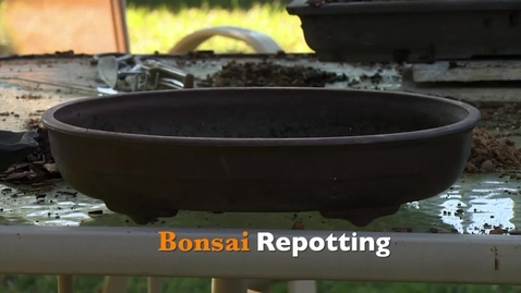 Thumbnail for entry Oklahoma Gardening: Bonsai Repotting