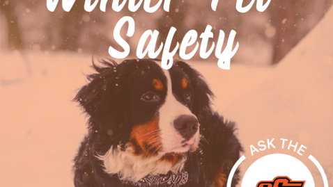 Thumbnail for entry Ask the Experts - Winter Safety for Pets