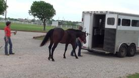 Thumbnail for entry Tips for Loading Your Horse