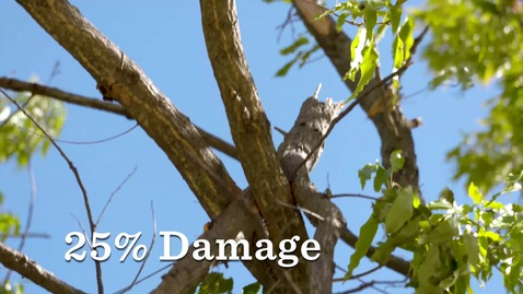 Thumbnail for entry Safely Assessing Damage done to Trees