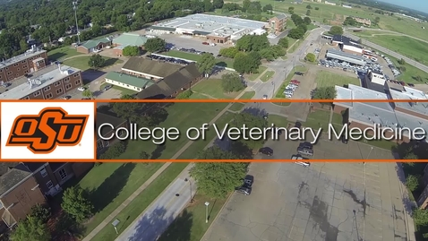Thumbnail for entry Magic in Veterinary Medicine