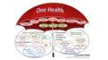 One Health with Stephen Ettinger, DVM, DACVIM (SAIM and Cardio)