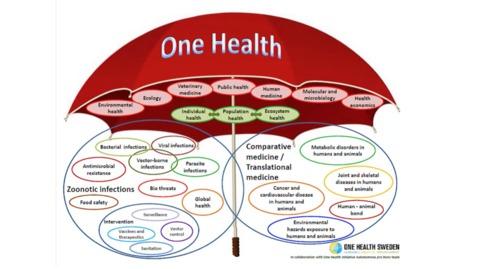 Thumbnail for entry One Health with Stephen Ettinger, DVM, DACVIM (SAIM and Cardio)