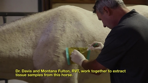 Thumbnail for entry Equine Sports Medicine & Rehab with Dr. Michael Davis