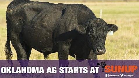 Thumbnail for entry Cow-Calf Corner - Preparing Bulls for Breeding (3/6/21)