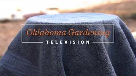 Thumbnail for entry Oklahoma Gardening Episode #4719 (11/07/20)