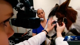 Thumbnail for entry IN THE NEWS: OSU Center for Veterinary Health Sciences Performing Cataract Surgery on Horses