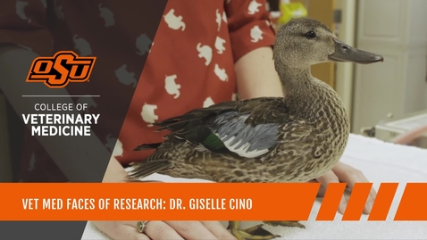Thumbnail for entry Vet Med Faces of Research: Dr. Giselle Cino