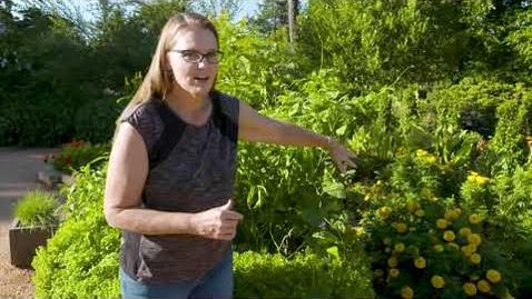 Thumbnail for entry Oklahoma Gardening Episode #4809 (08/28/21)