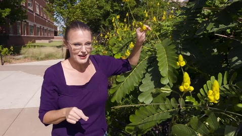 Thumbnail for entry Oklahoma Gardening Episode #4717 (10/24/20)