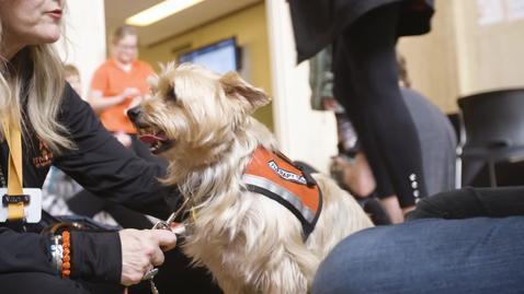 Thumbnail for entry Pete's Pet Posse: Assistance Dog Clarification