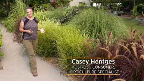 "Thumbnail for entry Ornamental Grass Series: Not True ""Grass"""