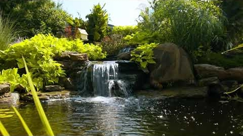 Thumbnail for entry Algae Control in Ponds and Water Gardens
