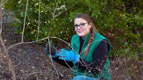 Thumbnail for entry Different Pruning Methods for Your Shrubs