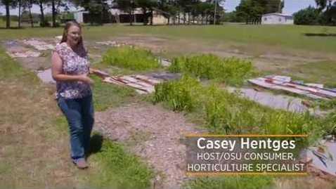 Thumbnail for entry Mulch Bermuda Grass Eradication