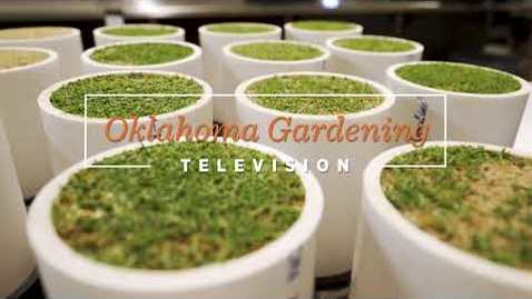 Thumbnail for entry Oklahoma Gardening Episode #4711 (09/12/20)
