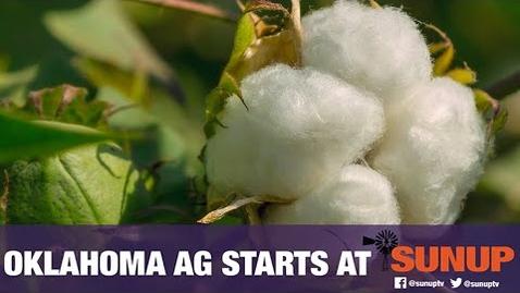 Thumbnail for entry Soil pH & Cotton (8/8/20)