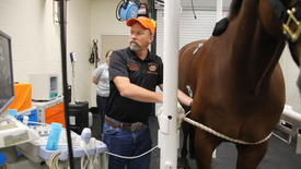 Thumbnail for entry Equine Sports Medicine at Oklahoma State University
