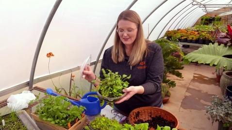 Thumbnail for entry Oklahoma Gardening Episode #4734
