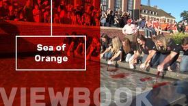 Thumbnail for entry Sea of Orange