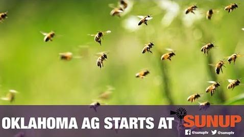 Thumbnail for entry Extension Explains - Pollinators (9/18/21)