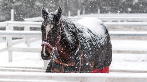 Thumbnail for entry Managing Horses in Winter (12/19/20)