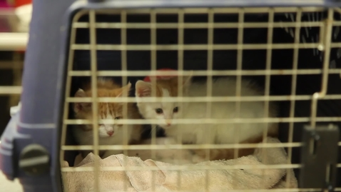 Thumbnail for entry Shelter Surgery: Why the Program Matters