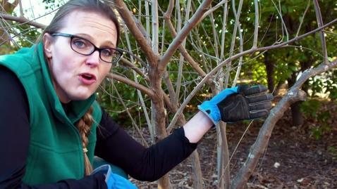 Thumbnail for entry Oklahoma Gardening Episode #4733