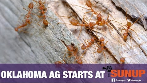 Thumbnail for entry Red Fire Ant Quarantine Update (8/14/21)