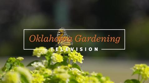 Thumbnail for entry OKG: Lantana's for Fall Pollinators