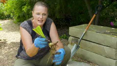 Thumbnail for entry Oklahoma Gardening Episode #4706 (08/08/20)