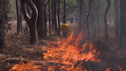 Thumbnail for entry Prescribed burning in wooded areas