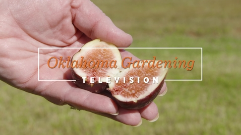 Thumbnail for entry OKG: Growing Figs in Central Oklahoma