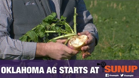 Thumbnail for entry Selecting a Cover Crop for Forage (12/12/20)
