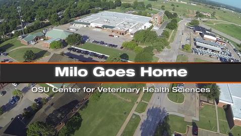 Milo Goes Home