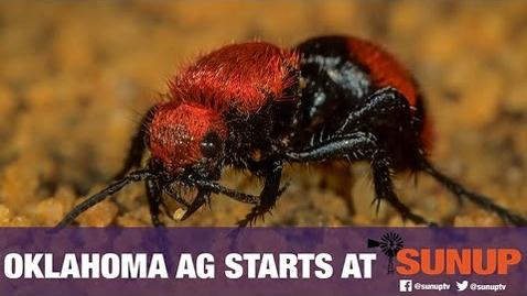 Thumbnail for entry Extension Explains - Velvet Ants (9/12/20)