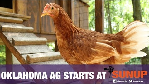 Thumbnail for entry Vet Scripts - Backyard Chickens & Biosecurity (1/23/21)