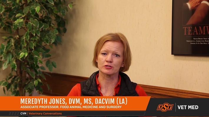 Vet Med Faces of Research: Dr. Meredyth Jones