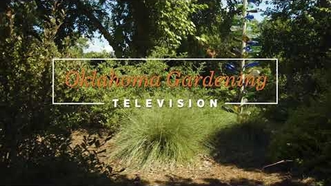 Thumbnail for entry Ornamental Grass Series: Natives