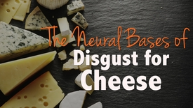 Thumbnail for entry The Neural Bases of Disgust for Cheese