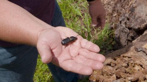 Thumbnail for entry Backyard Ecosystems