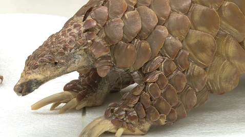 Thumbnail for entry Inside OSU: Zoology Vertebrate Collection