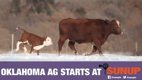 Thumbnail for entry Cattle & Cold Weather (2/6/21)