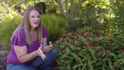 Thumbnail for entry Oklahoma Gardening Episode #4650 (06/13/20)