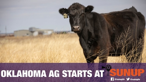 Thumbnail for entry Nutrition & First-Calf Heifers (9/12/20)