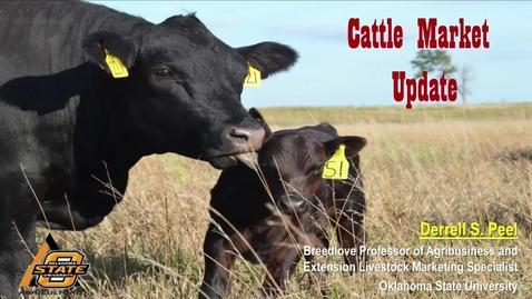 Thumbnail for entry Cattle Market Update