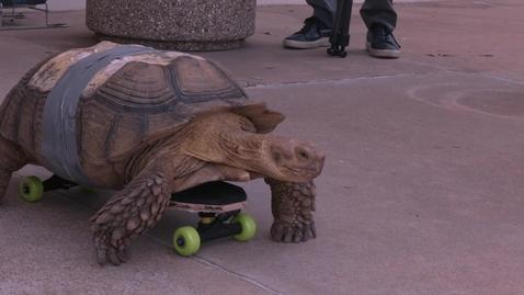 Thumbnail for entry Skateboarding Tortoise