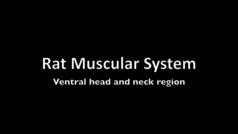 Thumbnail for entry Muscles of the head and neck of the rat