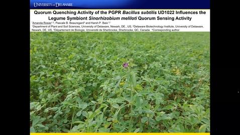 Thumbnail for entry Quorum Quenching Activity of the PGPR Bacillus subtilis UD1022 Influences the Legume Symbiont Sinorhizobium meliloti Quorum Sensing Activity,  Amanda Rosier